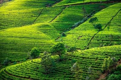 Expedice Sri Lanka 2020