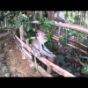 Expedice Thajsko